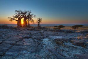 baobab-kalahari-desert