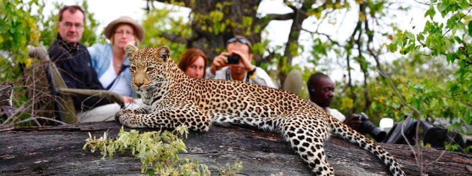 Leopard a Timbavati, reserve privée