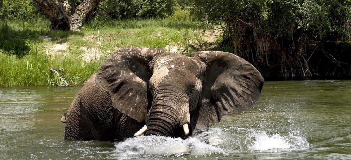 Eléphant bain au parc Kruger