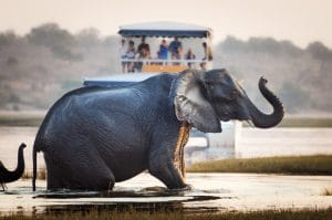 Safari rivière afrique du sud