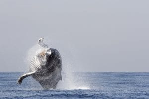 baleine en Afrique du sud