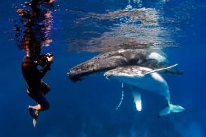 Plongée et baleines en afrique du sud