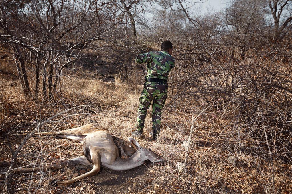 black-mamba-femme-antilope-braconnage