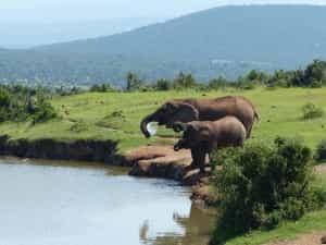 elephant-famille-afrique-du-sud-decouverte