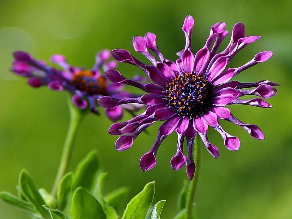 Faune Flore Plantes Et Animaux D Afrique Du Sud