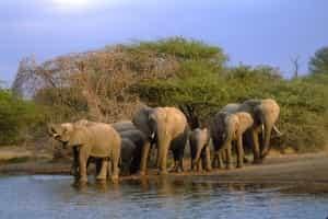 kruger-elephant-afrique-sud-decouverte