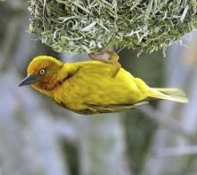science-citoyenne-ornithologie
