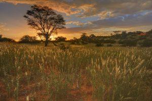 paysage-kalahari-afrique-sud-decouverte