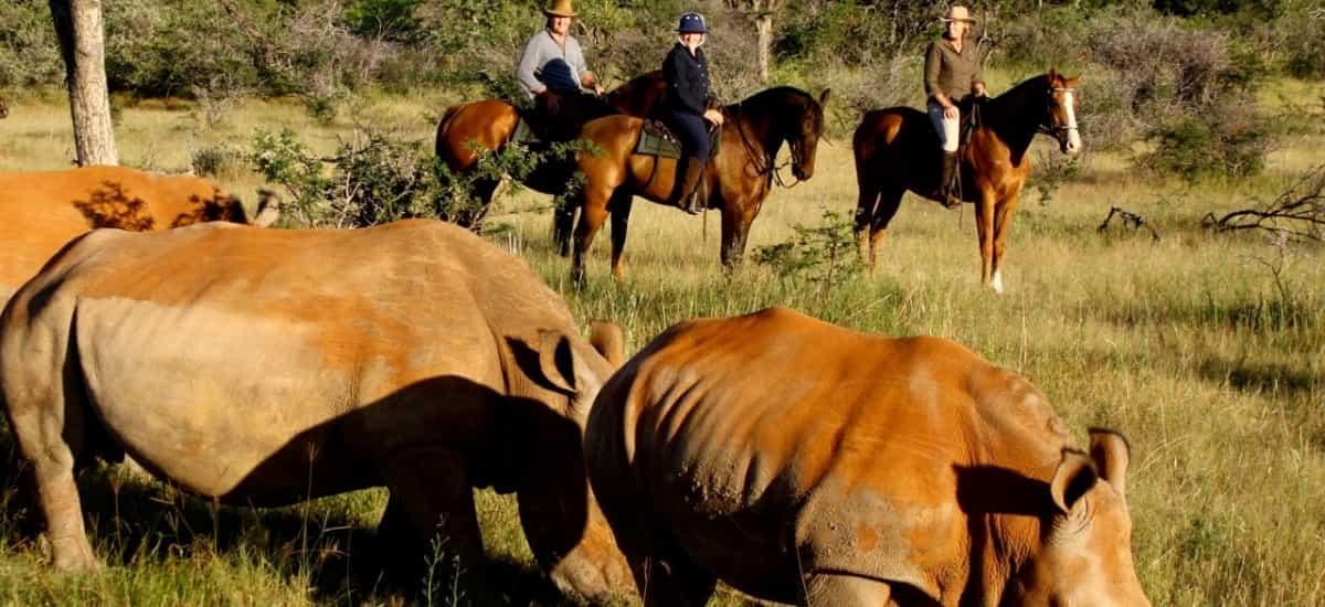 Safari à cheval Afrique du Sud
