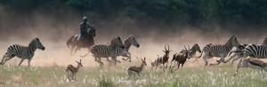 safari-cheval-karoo-afrique-du-sud-decouverte