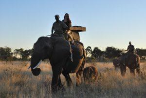 Safari à dos d'éléphant afrique du sud