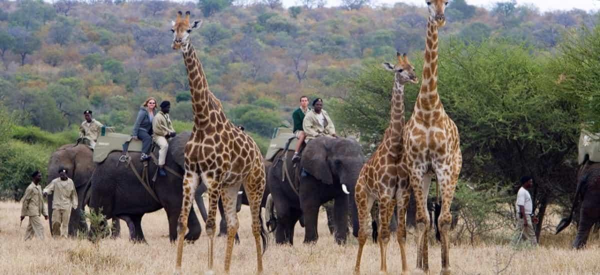 Les safaris à dos d'éléphant pour prendre de la hauteur