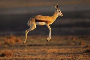 springbok-afrique-sud-decouverte