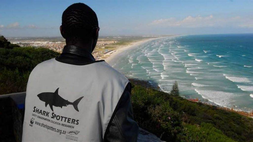 donneur-alerte-requins-afrique-du-sud