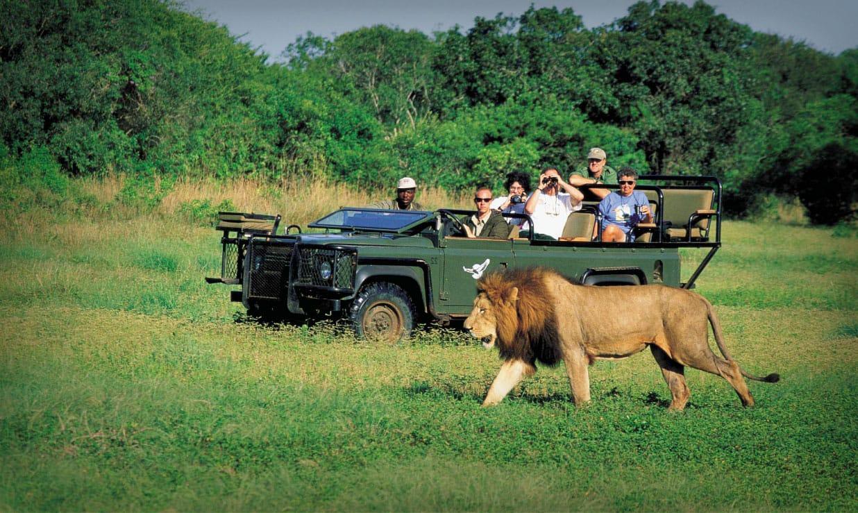 Safari en 4x4 ouvert en Afrique du Sud au Kruger