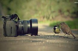 Appareil photo intrigue 2 oiseaux