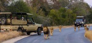 Self drive vehicule ouverte Kruger