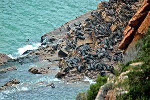 Réserve naturelle de Bobberg en Afrique du Sud