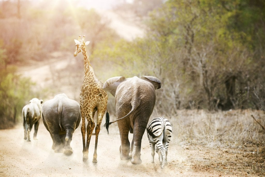 faune-girafe-elephant-zebre-kruger-chemin-dos-is-afrique-du-sud-decouverte