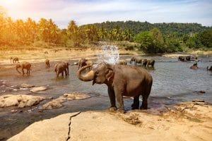 faune-troupeau-elephant-kruger-is-afrique-du-sud-decouverte