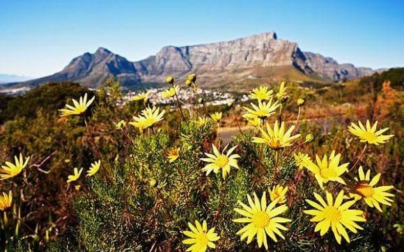 Les Fynbos Sud Africains Afrique Du Sud Decouverte