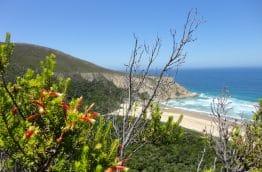 Fynbos, végétation typique d'Afrique du Sud