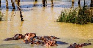 isimangaliso-wetland-unesco-afrique-du-sud-decouverte
