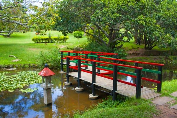 jardins-japonais-afrique-du-sud-decouverte