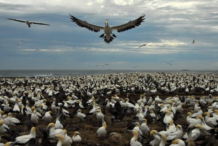 addo-bird-island-afrique-du-sud-decouverte