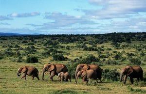 addo-elephant-afrique-du-sud-decouverte