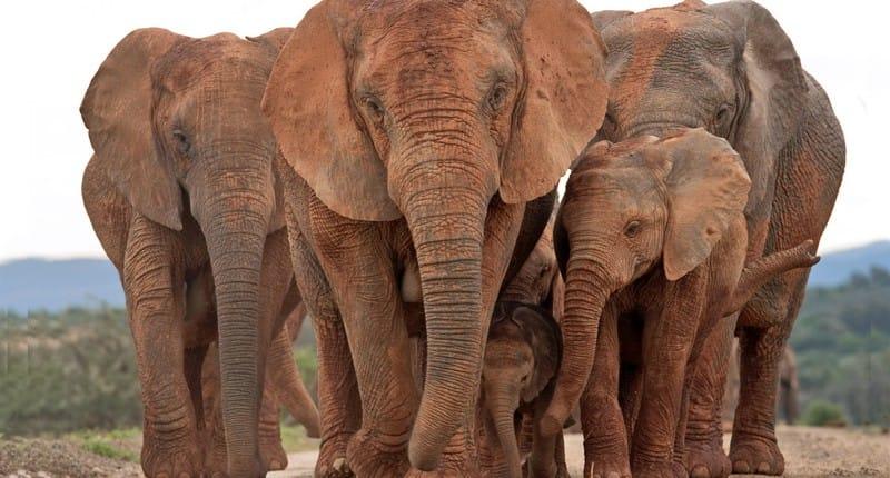 addo-elephant2-afrique-du-sud-decouverte
