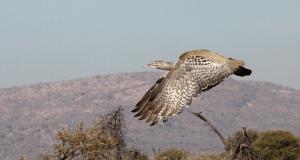 kori-madikwe-vol