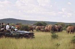madikwe-elephant-afrique-du-sud-decouverte