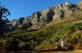 table-mountain-velo-afrique-du-sud-decouverte