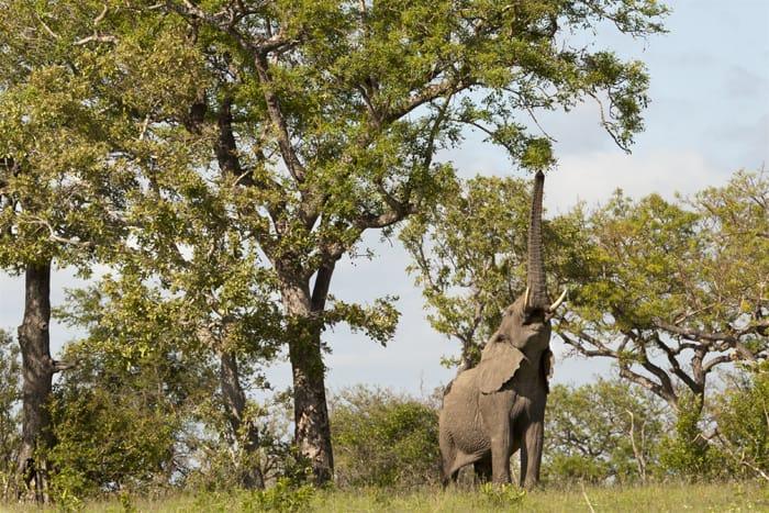 amarula-elephant-afrique-du-sud-decouverte