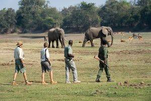 marcher-2-safari-afrique-du-sud-decouverte