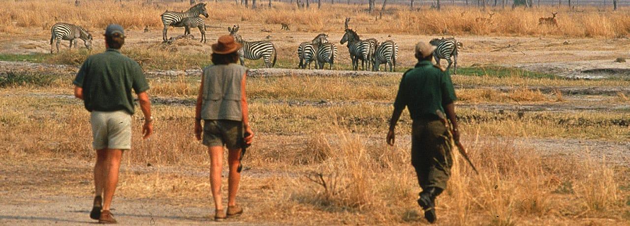 marcher-3-safari-afrique-du-sud-decouverte