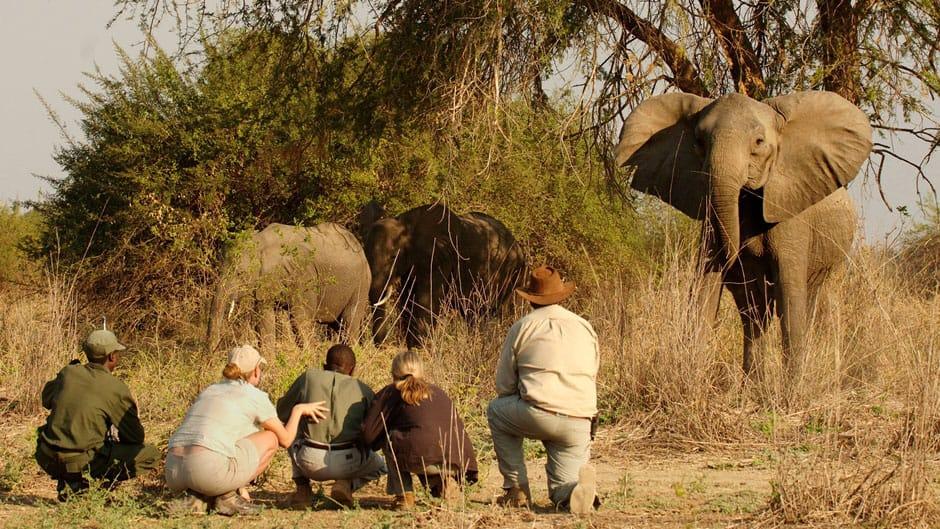 marcher-safari-afrique-du-sud-decouverte