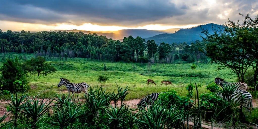 nature-swaziland-afrique-du-sud-decouverte