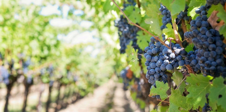 vins-afrique-du-sud-decouverte