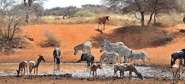 mokala-parc-national-animaux-afrique-du-sud-decouverte