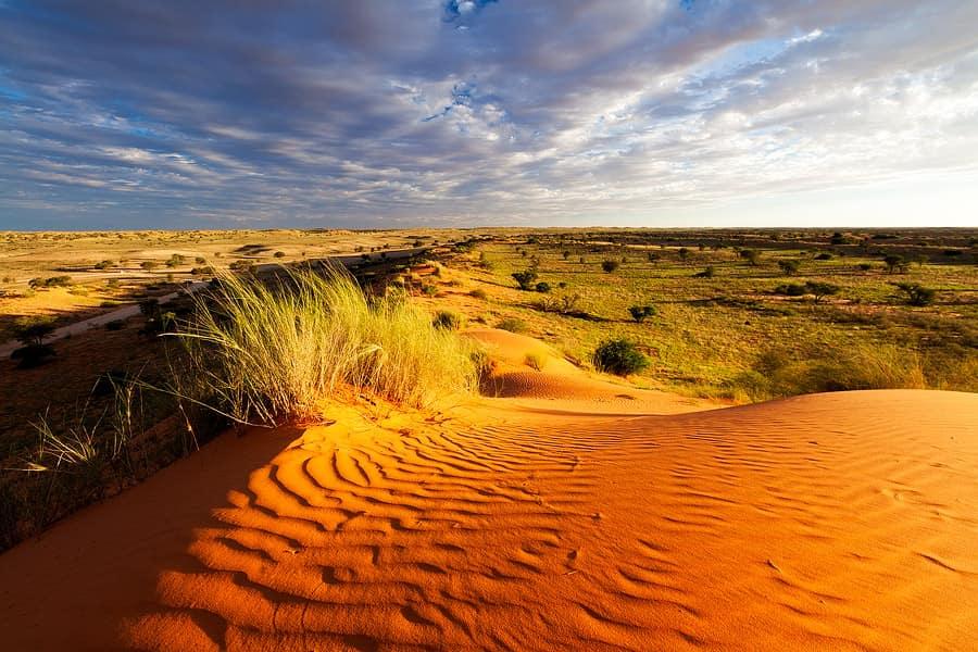 endroits-naturels-kgalagadi-desert-afrique-du-sud-decouverte