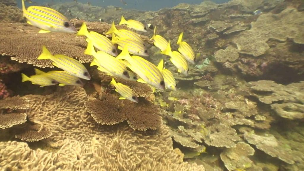 endroits-naturels-seven-mile-reef-afrique-du-sud-decouverte