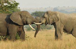 faune-elephant-afrique-du-sud-decouverte