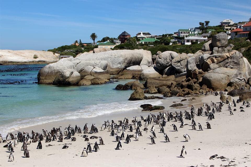 plages-boulders-afrique-du-sud-decouverte