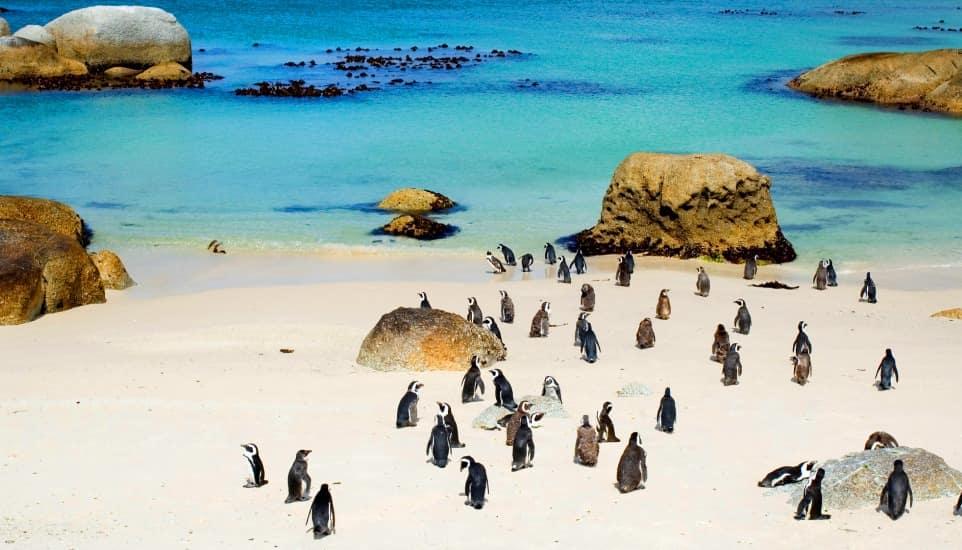 plages-boulders-beach-afrique-du-sud-decouverte
