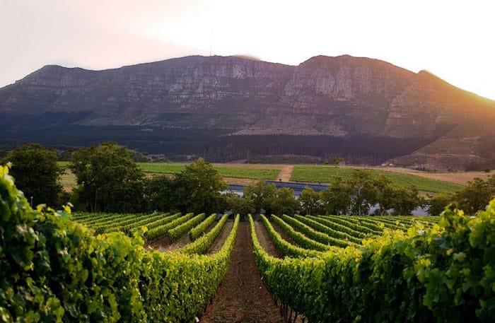 vins-du-cap-groot-constantia-afrique-du-sud-decouverte
