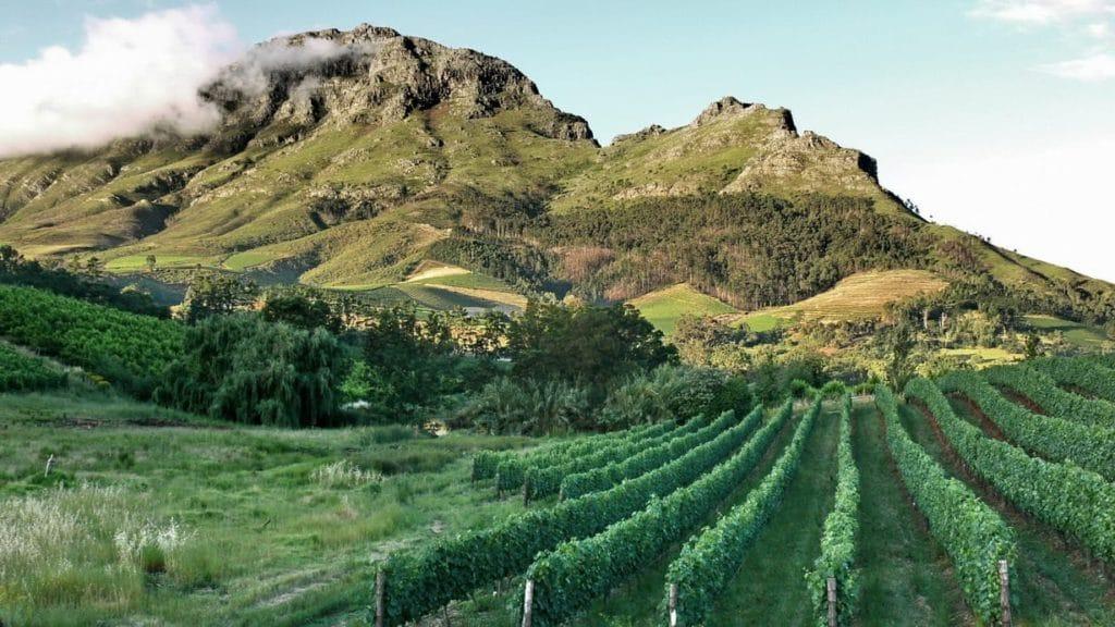 vins-du-cap-stellenbosch-vineyards-afrique-du-sud-decouverte