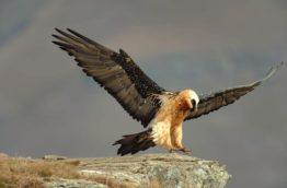 oiseaux-zululand-afrique-du-sud-decouverte