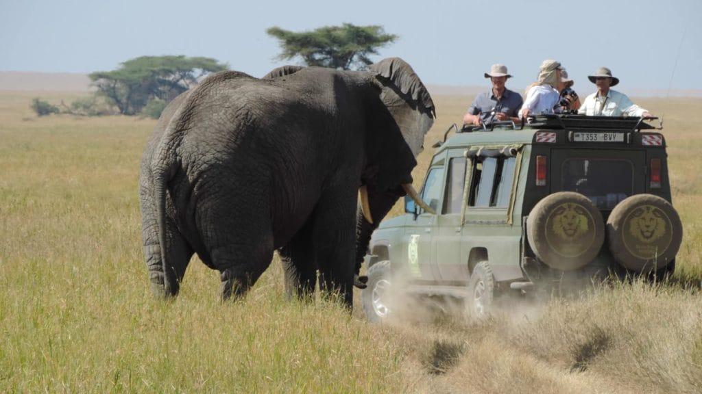 safari-elephant-afrique-du-sud-decouverte